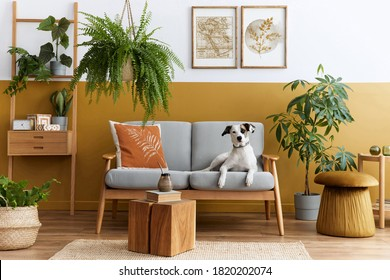 Stylish interior of living room with design furniture, gold pouf, plant, mock up poster frames, carpet, accessoreis and beautiful dog lying on the sofa in cozy home decor. Template.