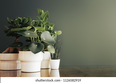 Stylish interior of with many different houseplants, design pots and copy space on dark green wall