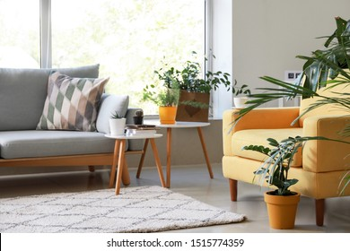 Stylish interior of room with beautiful houseplants