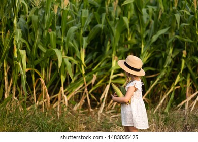 Stylish Little kid in a hat standing in the middle of a corn field. Harvest time. organic agriculture for children. Cute child on a sunny summer day outdoor. Sun light. Happy children day concept