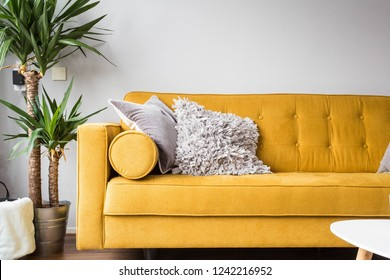Stylish living room interior with comfortable yellow sofa and green plant modern design