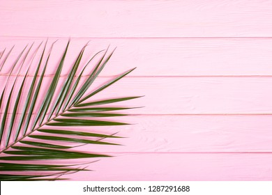 Stylish minimal composition with  green leaves on a pink pastel background. pink wooden background with palm leaf. Artwork mockup with copy space - Image