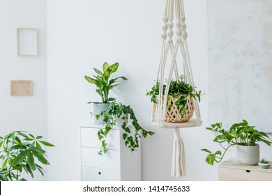 Stylish and minimalistic boho interior with crafted and handmade macrame shelf planter hanger for indoor plants, design furnitures, elegant accessories. Cozy and sunny home decor of living room.