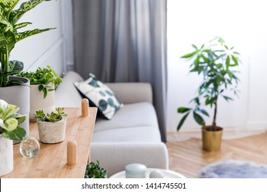 Stylish and minimalistic boho  interior of living room with wooden shelf, gray sofa, design and elegant accessories. Botany  home decor with a lot of plants. Bright and sunny space. Home garden. - Shutterstock ID 1414745501