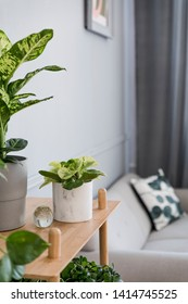 Stylish and minimalistic boho  interior of living room with wooden shelf, gray sofa, design and elegant accessories. Botany  home decor with a lot of plants. Bright and sunny space. Home garden. - Shutterstock ID 1414745525
