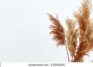 Stylish mockup with beige autumn dry flowers, fall concept. Minimal home still life background.
