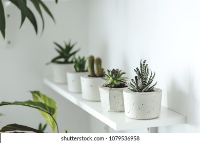 The stylish room filled a lot of cacti in cement pots. Modern composition of the shelf.