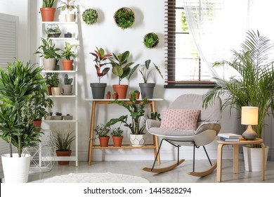 Stylish room interior with different home plants - Shutterstock ID 1445828294