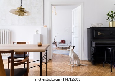 Stylish scandi interior of home space with design wooden table, chairs, sofa and gold pendant lamp. Living room with design accessories and piano. Beautiful dog sitting on the parquet. Elegant decor