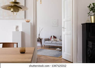 Stylish scandi interior of home space with design wooden table, chairs, sofa and gold pendant lamp. Living room with design accessories and piano.Beautiful white dog sitting on the couch.Elegant decor