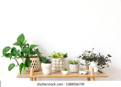 Stylish scandinavian interior with design commode and beautiful composition of plants in different hipster pots. Modern home decor. White background wall. Minimalistic concept. Template. Home garden.