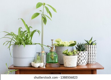 Stylish scandinavian interior with design commode and beautiful composition of plants in different hipster pots. Modern home decor. Gray background wall. Minimalistic concept. Template. Home garden. - Shutterstock ID 1388506823