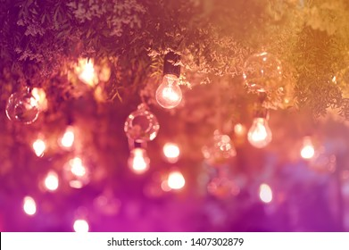 Stylish toned photo of string lights hanging on tree in the garden at evening time. Fashion decoration with bulbs for night summer party. Outdoor electric lamps