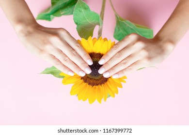 Stylish trendy female manicure. Beautiful young woman's hands on pink background with sunflower. Manicure concept.