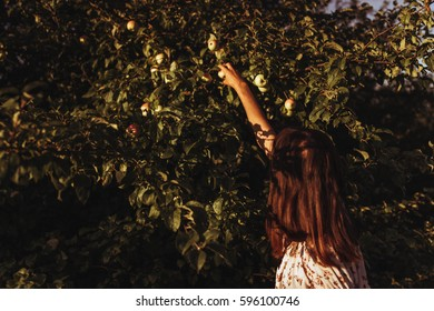 stylish woman picking up apples from tree in sunlight in summer evening orchard  under sun rays. atmospheric moment. boho girl relaxing in meadow. vacation and travel.