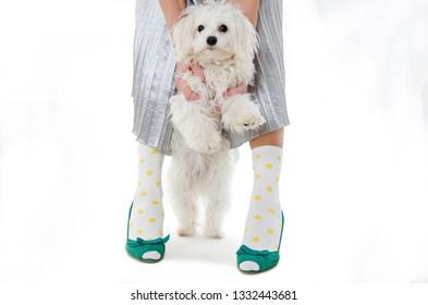 Stylish woman with white dog. Isolated on white background
