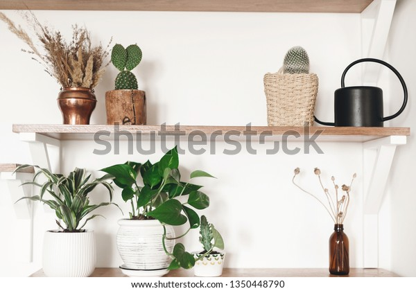 Stylish Wooden Shelves Green Plants Black Stock Photo Edit