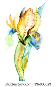 Stylized Iris flower, watercolor illustration