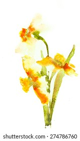 Stylized Narcissus flowers for greeting card ; Watercolor illustrator
