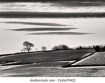 stylized stark monochrome image of a bleak winter landscape with snow covered fields with black stone walls and crows flying over bare trees