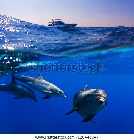 delfiini suku puoli video