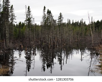 submerged land and trees