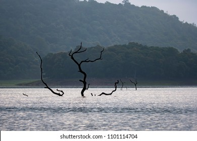 A submerged tree in the backwaters of bhadra river during a boat safari