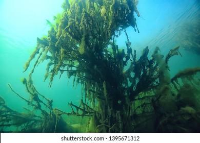 submerged trees flooded underwater / lake fresh jungle water ecology beautiful landscape