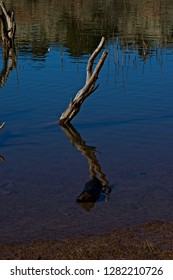Submerged Trees and Lake Water Reflections, Lake McKinsey, Texas