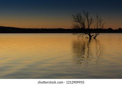 Submerse tree in Alentejo Lake