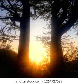 Subset  on  the  forest