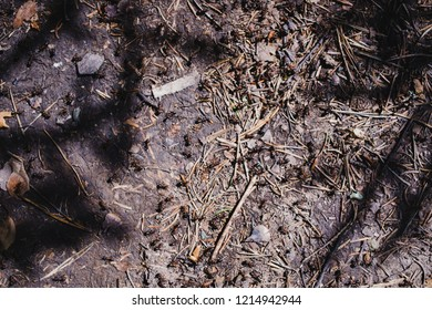 The substrate of the forest. Texture. Background top View. Macro. Anthill. Shadows. Ants. Fallen leaves and needles of spruce.