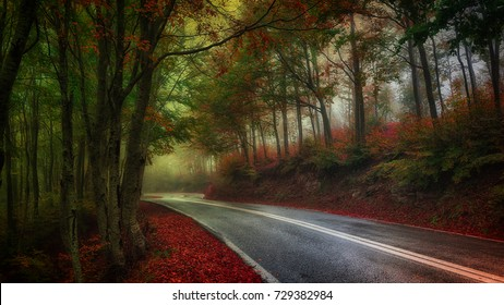 subtle, pale and misty autumn scene featuring a winding road through a misty autumn forest with red leaves and green mist