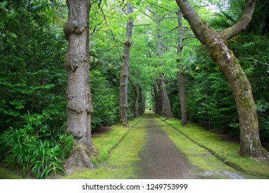 subtropical botanical garden landscapes around vulcanic hot springs with ginkgo or maidenhair tree lanes, plant borders and tree ferns