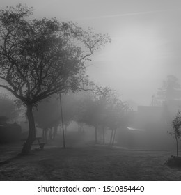 Suburban misty morning. Trees in silhouette.