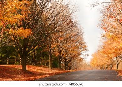 suburban road in the fall
