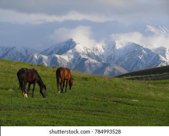 The Suburbs Of Bishkek. Kyrgyzstan. The snowy peaks of the Tien-Shan.