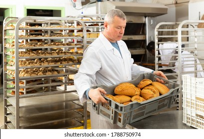Successful baker during daily work in bakeshop