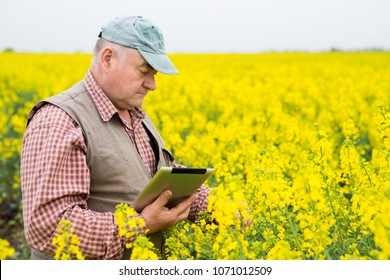 Successful farmer with his field. Using smart technology for growing and developing plants.