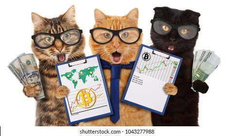 Successful Trader. Stock Market Graph Diagram. Funny cats with financial charts.
