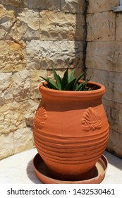 Succulant in a  terra-cotta pot in front of a stone wall (selected focus)
