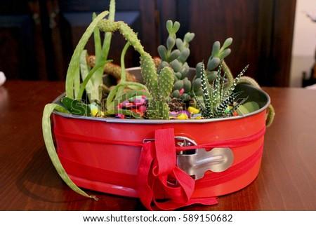 Succulent Cactus Garden Red Cake Mold Stock Photo Edit Now