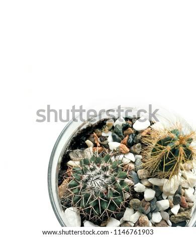 Succulent Cactus Home Terrarium Glass Pot Stock Photo Edit Now