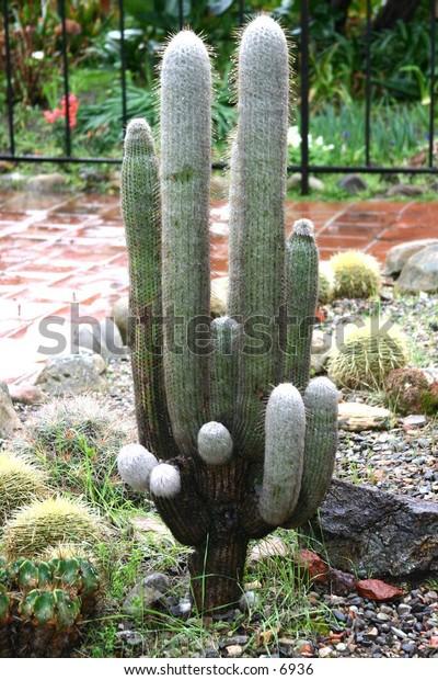 succulent cactus standing tall