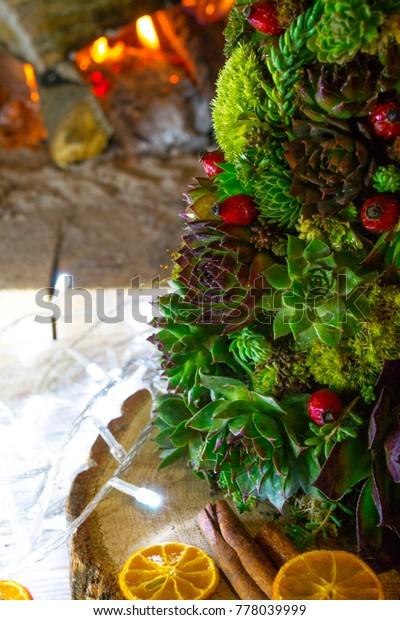 Christmas Succulent Decor.Succulent Christmas Tree Unusual Christmas New Stock Photo