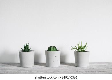 succulent in concrete pot.