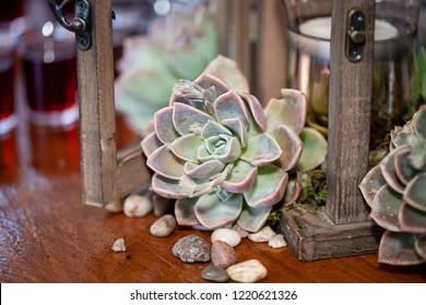 succulent detail shot