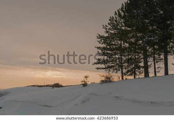 Succulent forest of Igneada Prvince of Kirklareli city Turkey.In winter