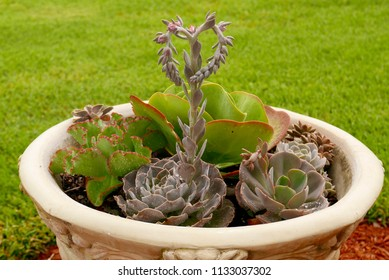 Succulent garden with a heart-shaped bloom