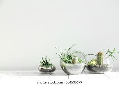Succulent gardens in glass vases on wooden floor